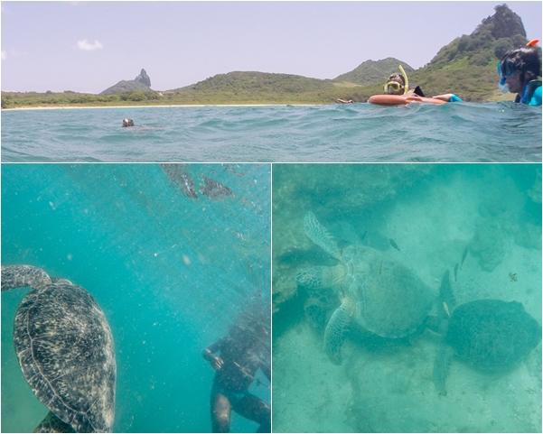praia do sueste fernando de noronha mergulho com tartarugas