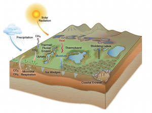 Thawing permafrost can release carbon dioxide and methane through microbial respiration. The thawing also produces polygon-shaped patterns of lakes. The complexity of these interactions – and many others – contributes to the challenge of simulating the overall climate change. (Illustration: Diana Swantek from the Earth Sciences Division at Lawrence Berkeley National Laboratory.)