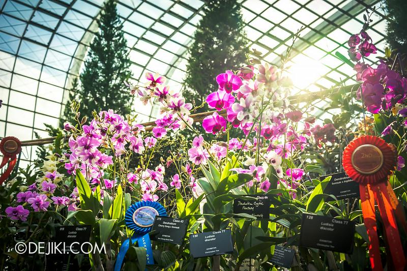 Gardens By The Bay U2013 Orchid Extravaganza