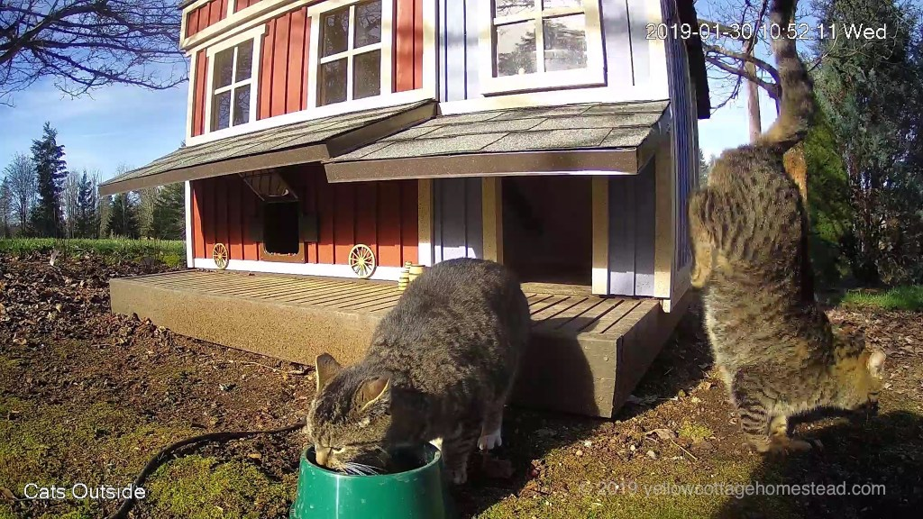 Cat jumping off awning