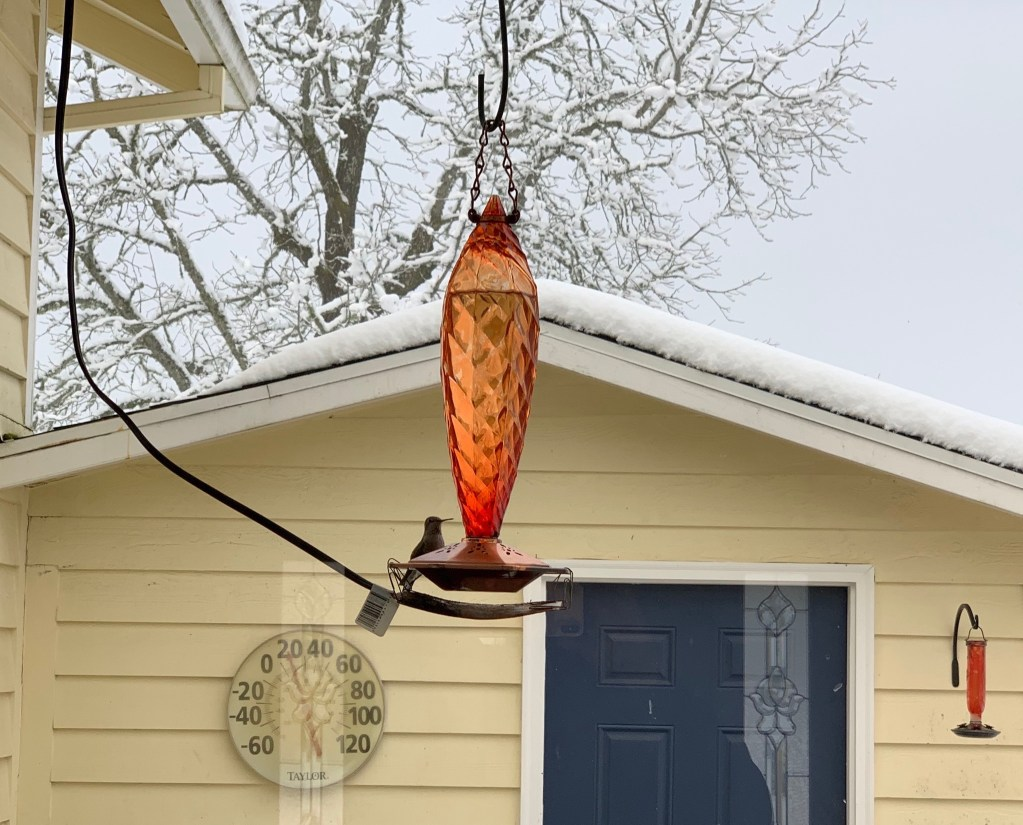 Hummingbird on heated feeder