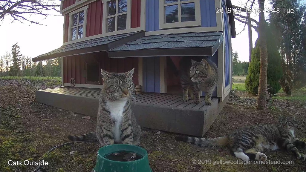 Three cats outside