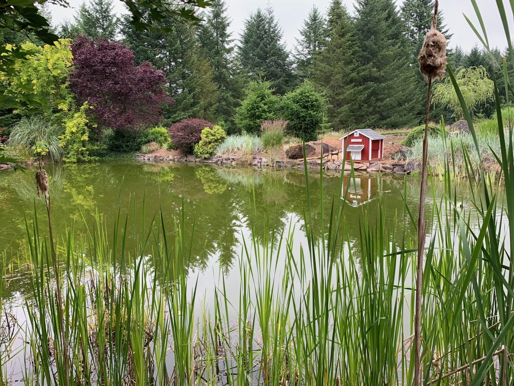 Pond and duck house through cattails