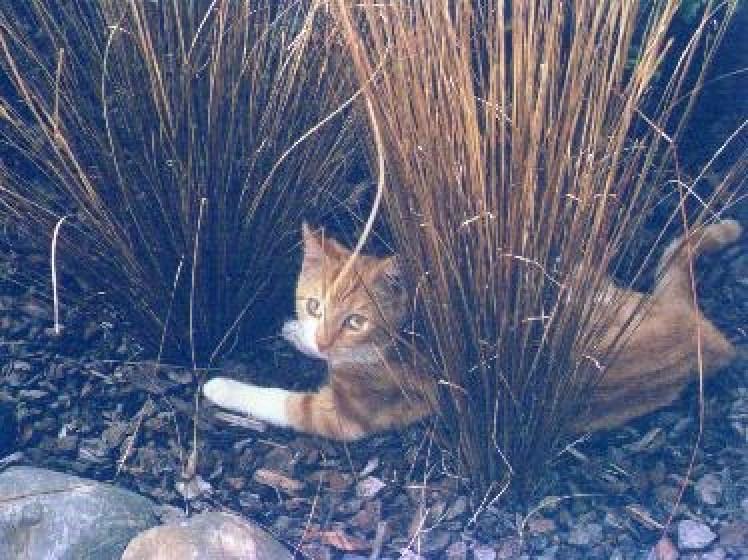 Pixel under grasses