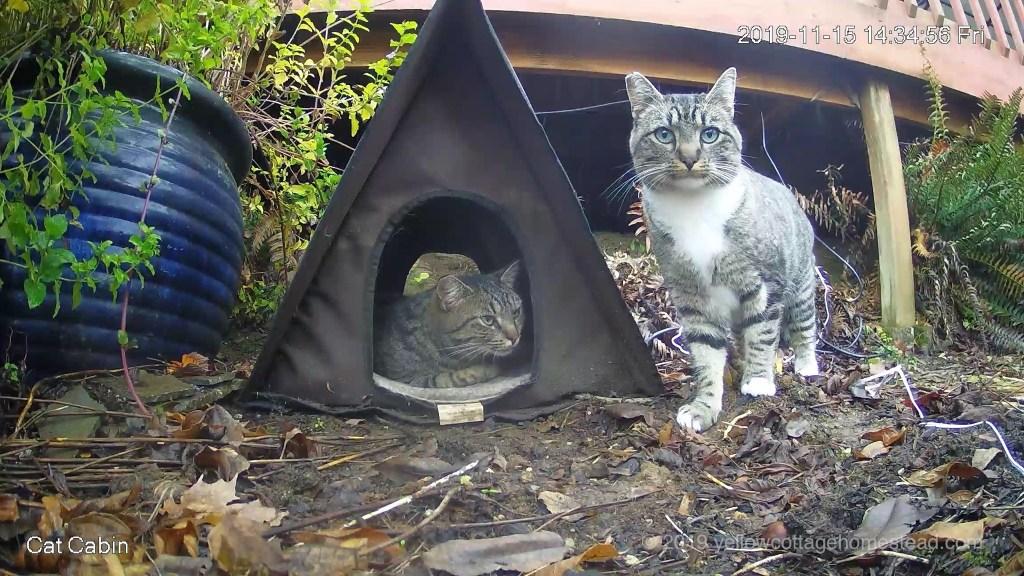 Cats at cabin