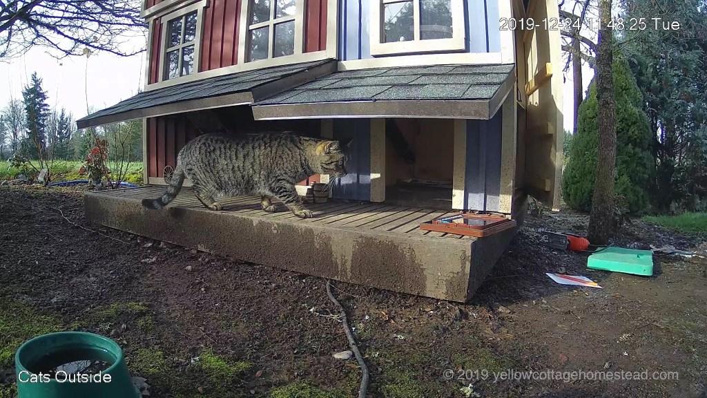 Cat door installation