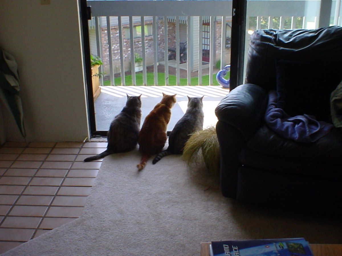 Three cats