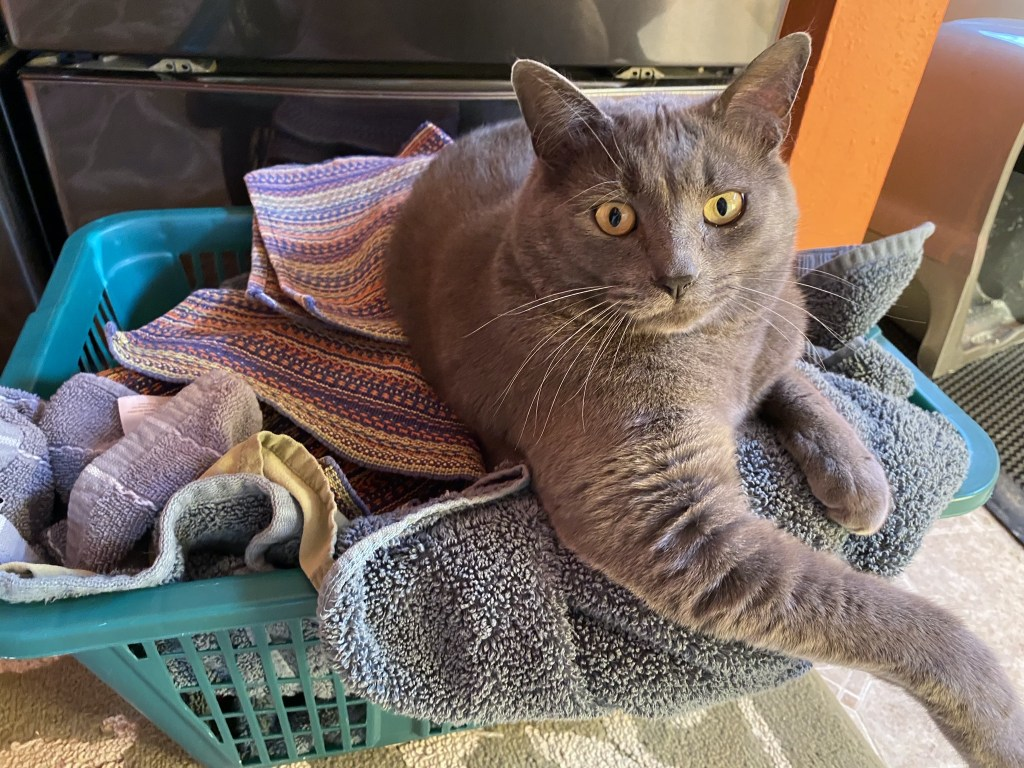 Paladin in laundry basket