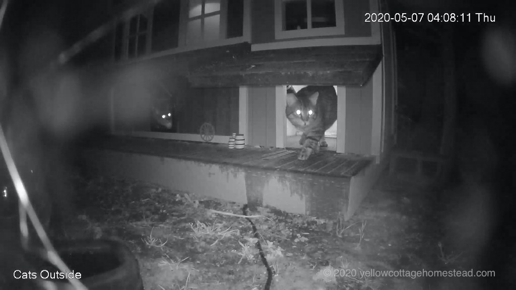 Alien cat visitor