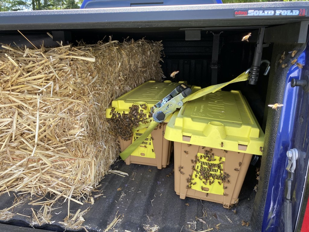 Straw and bee nucs