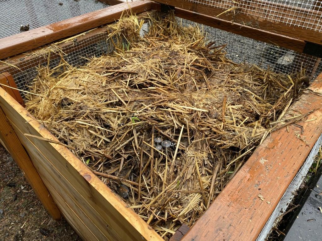 Compost fungi