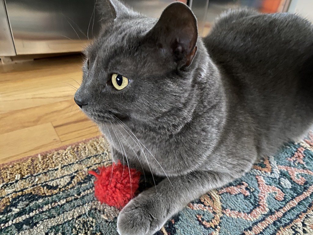 Paladin and his red ball