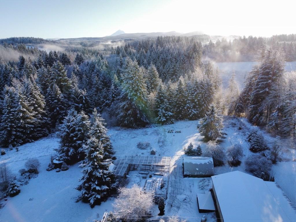 Mount Hood, snowy trees, etc
