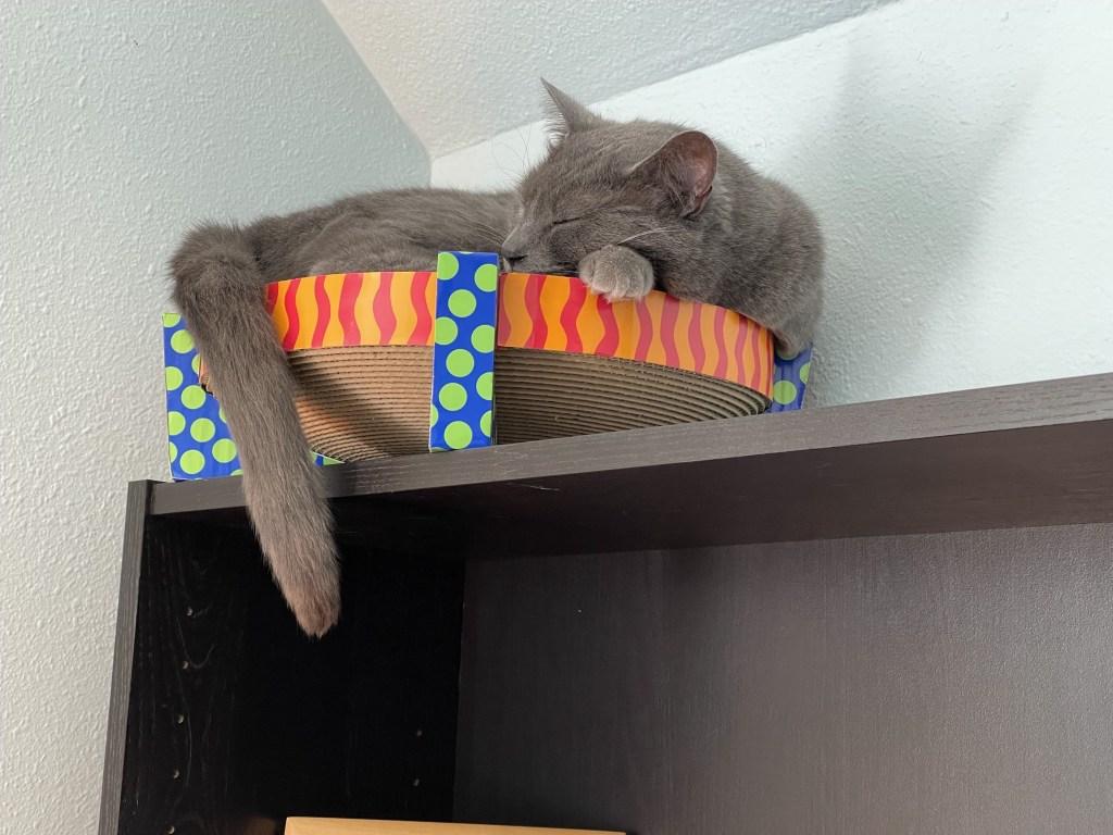 Paladin in cardboard nest