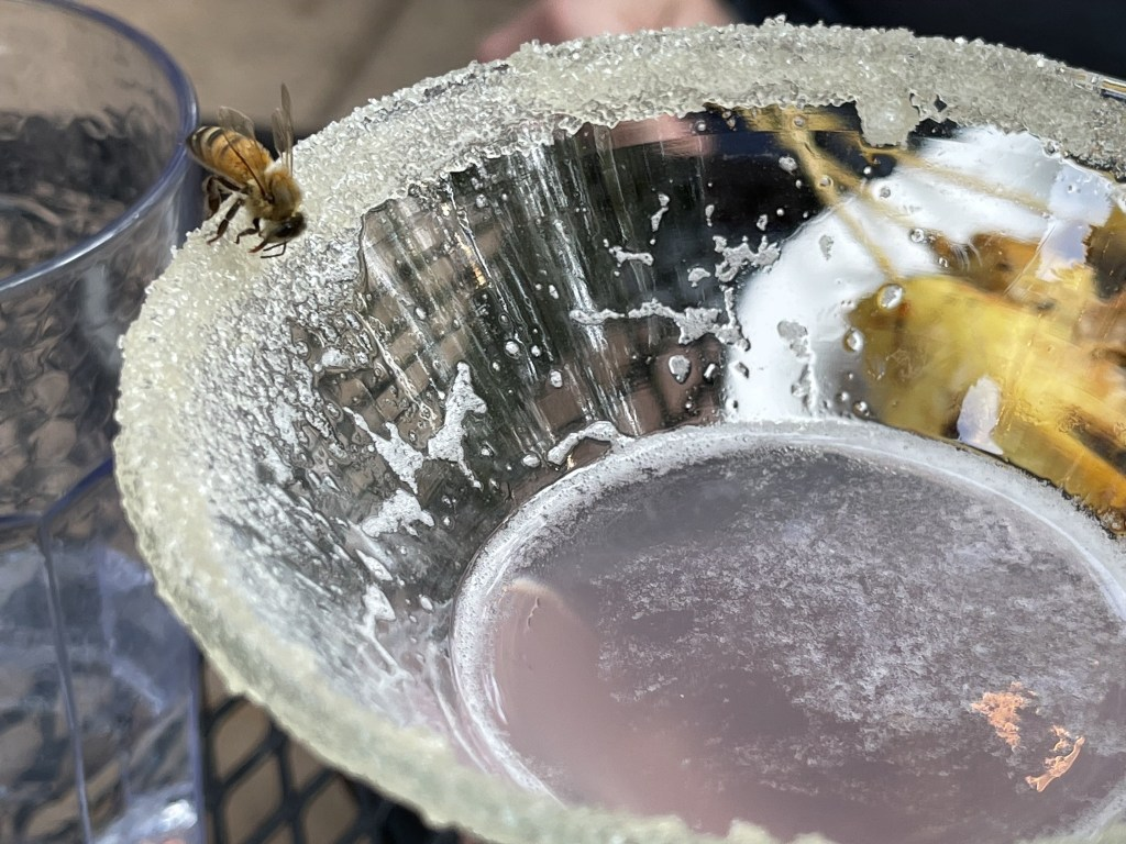 Bee on sugary rim of glass