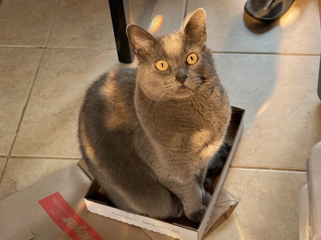 Paladin in a box