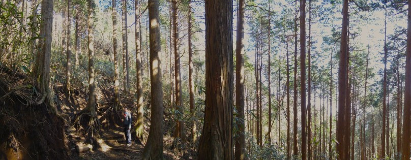 Hiking Mount Kintoki