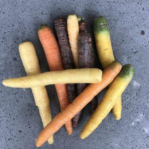 regenboog-wortel-5