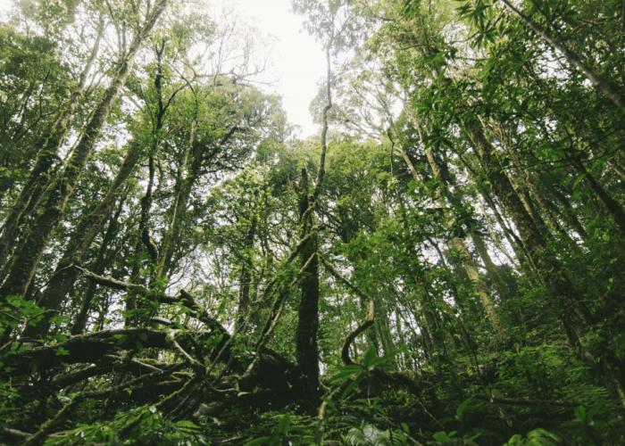 Rainforest palmolie