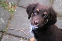 Kleine hond van Kaylee