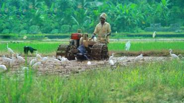 Adat Kole Wetland and Paddy Fields - farmer push tiller
