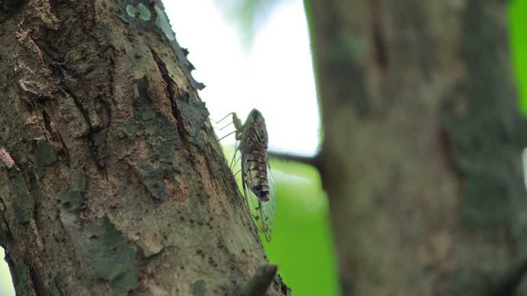 Cricke-Beetle-Insects-of-Kerala