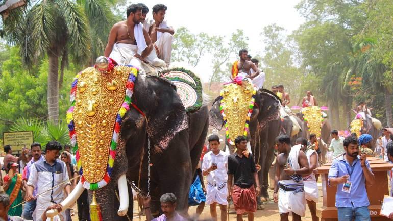 Elephants with nettippattom-decorative golden headdress-Thrissur Pooram
