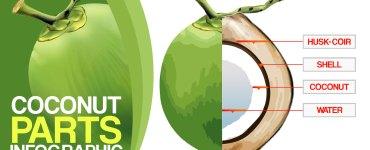 Coconut-Coconut Parts-Coconut Husk-Coconut-Shell-Coconut-Milk-Coconut-Water-Coconut-Info graphic