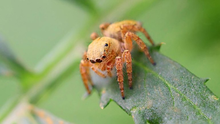 small spider, red spider, orange spider, spider macro photo, insects of kerala, insects kerala, kerala insects