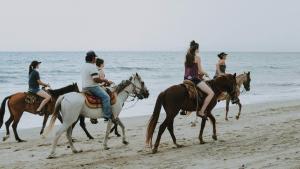 """""""Zitten kan iedereen"""": Paardrijden officieel geschrapt als sport"""