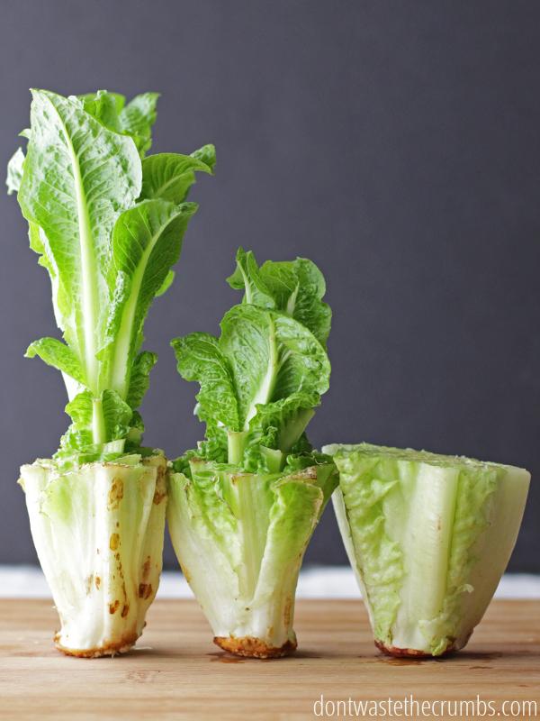 cara menanam sayur 4.jpg