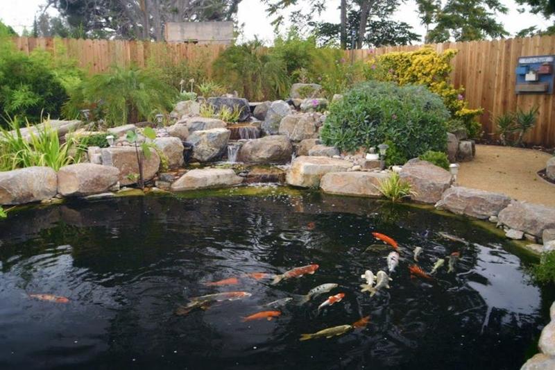 Kolam Ikan Koi Pembawa Keuntungan