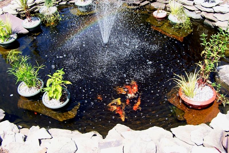 Kolam Ikan Koi Menanmbah Keuntungan Sosial