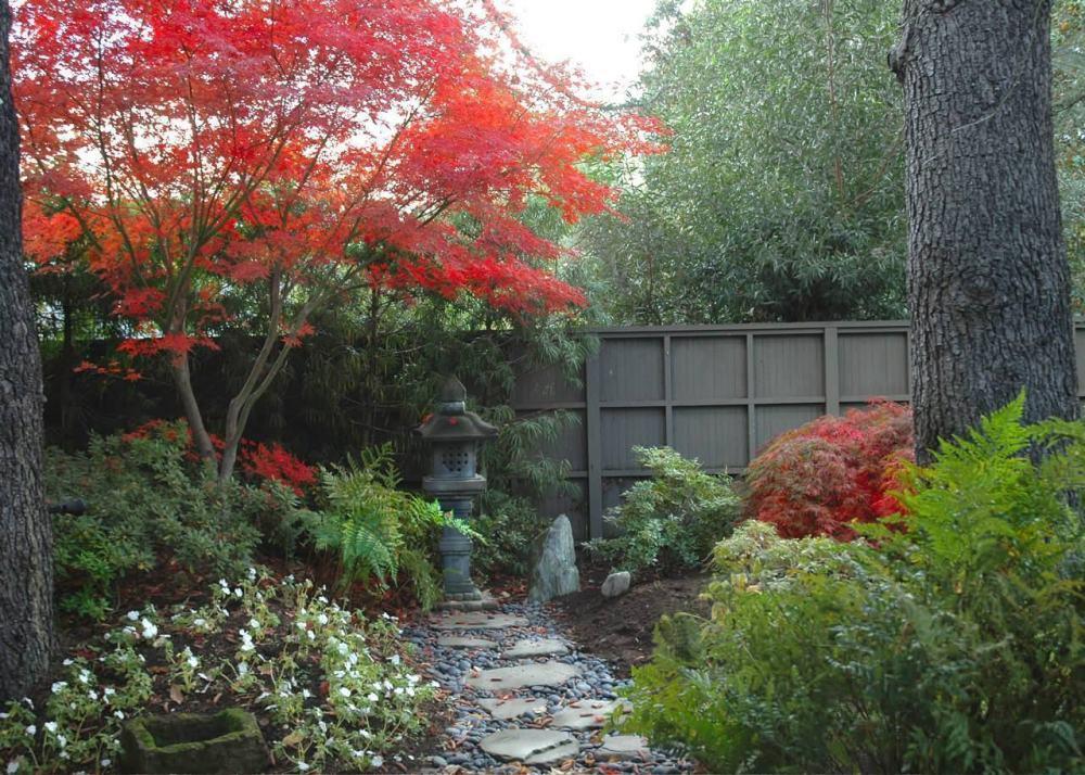 Taman Rumah Minimalis Pohon Maple