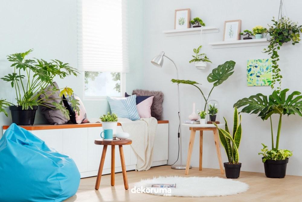 desain rumah modern tanaman