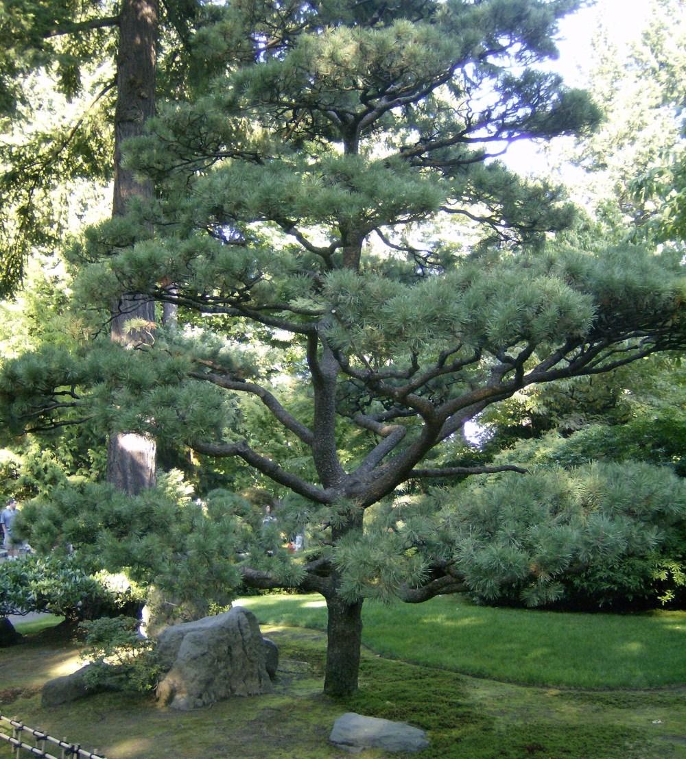 Halaman Rumah Pinus