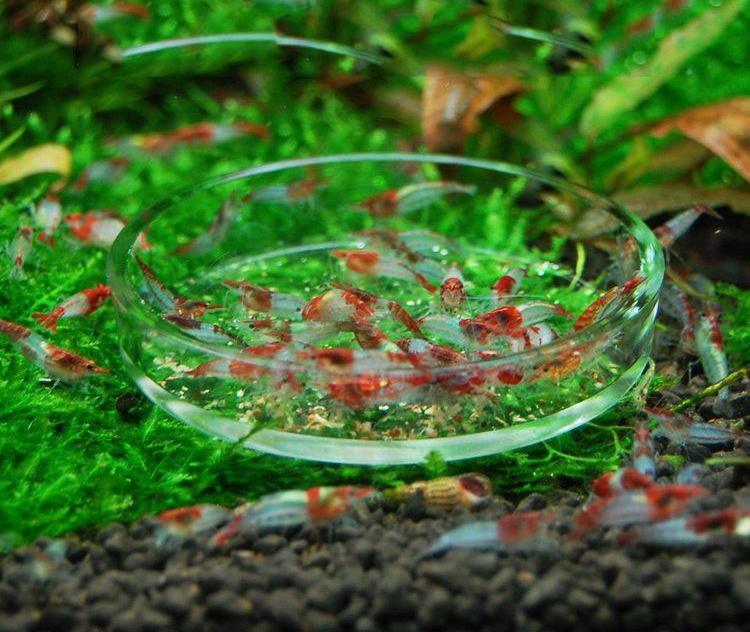 Barang Laci Dapur Hiasan Aquarium