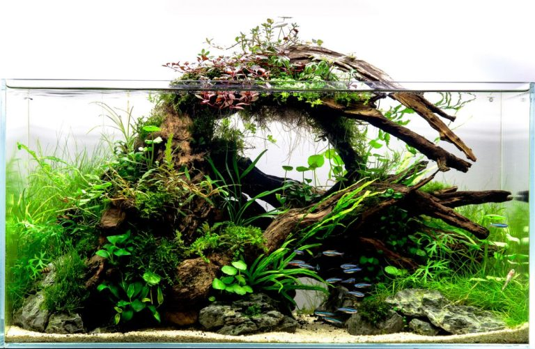 Hiasan Aquarium Drifwood