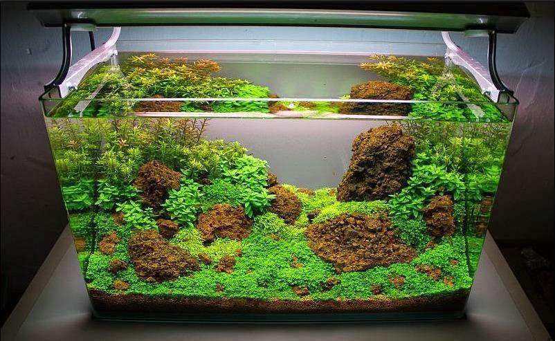 7 Ide Hiasan Aquarium Yang Nggak Menguras Dompet