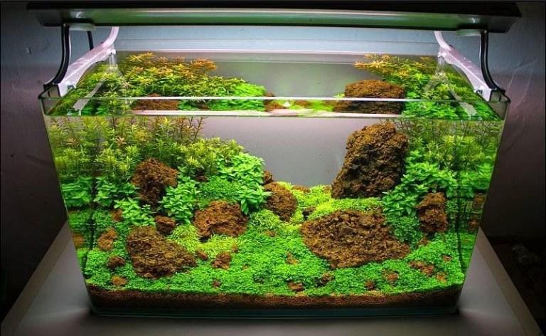 Hutan Kecil Hiasan Aquarium