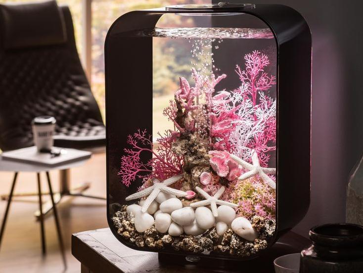 desain aquarium mini