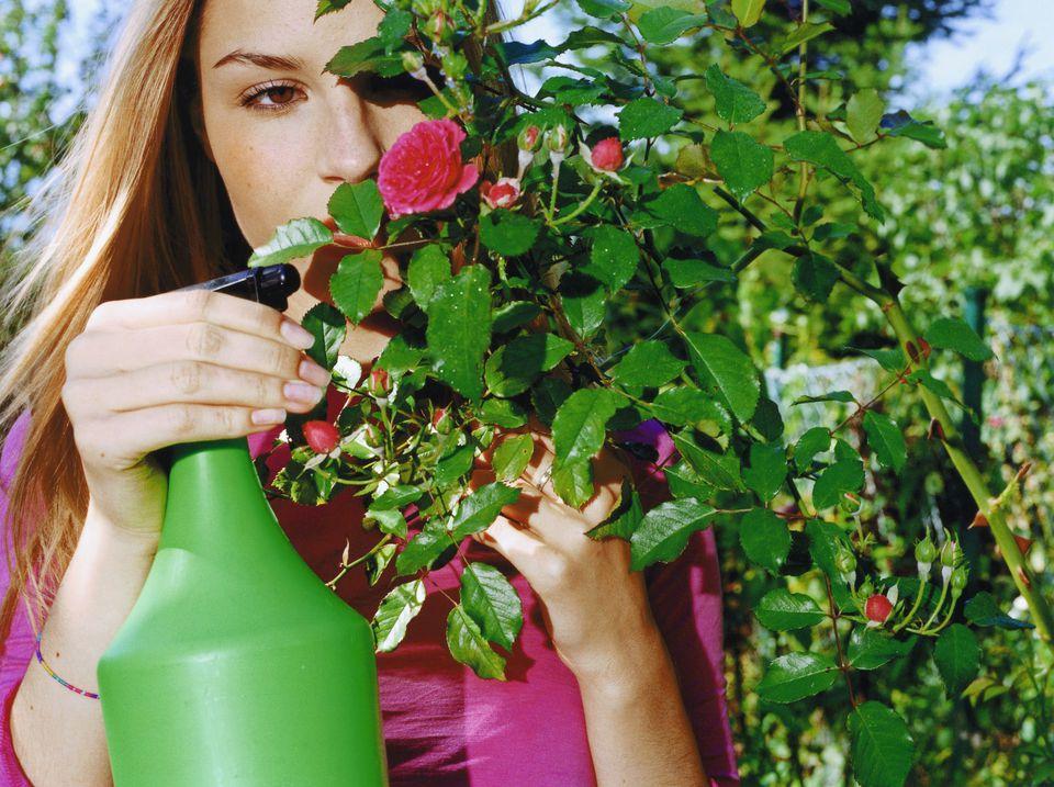 kebun buah membasmi hama