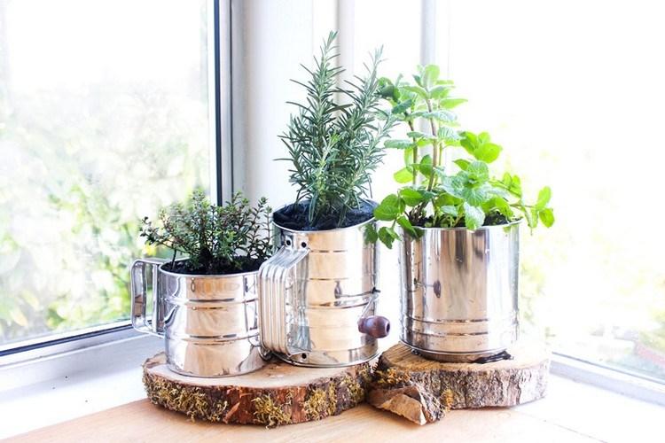 Kebun Sayur Penghias Ruangan