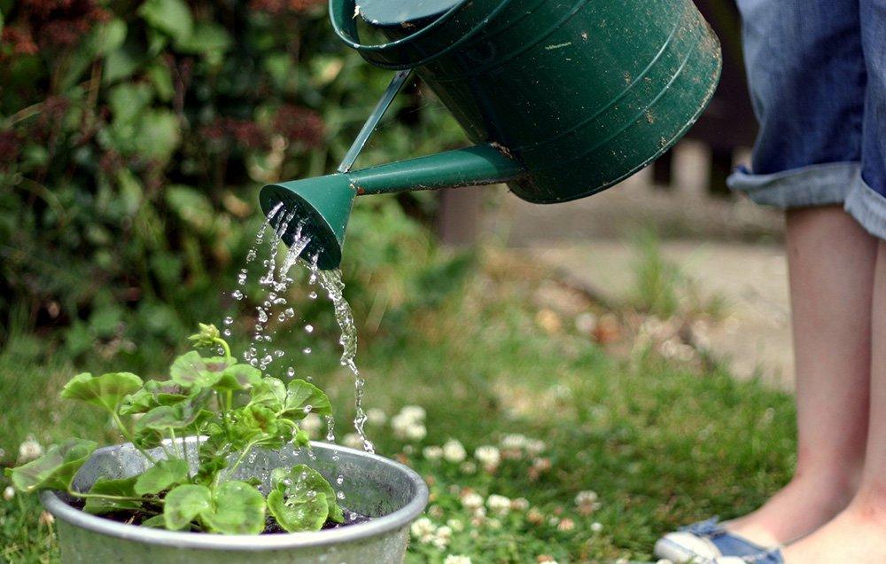 menyirami bunga kertas