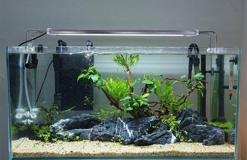 Desain Akuarium Ruang Tamu  ingin memiliki akuarium air laut pahami dulu 7 hal berikut