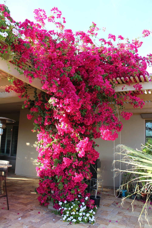 Bunga Daerah Tropis