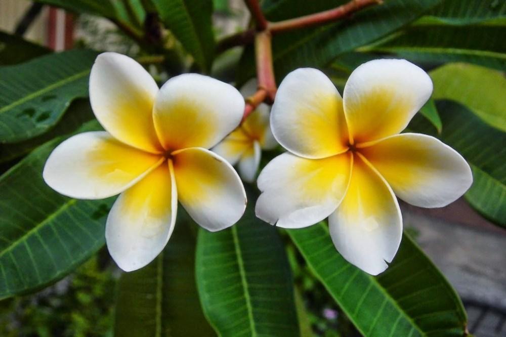 7 Bunga Ini Cocok Ditanam Di Daerah Tropis Seperti Indonesia