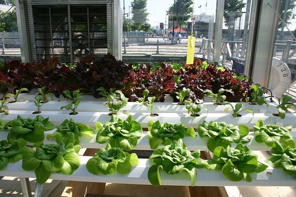 Cara Membuat Kebun Tanaman Hidroponik Di Rumah