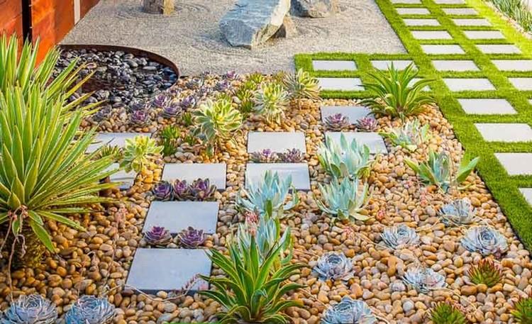Kebun rumah mini dengan kaktus