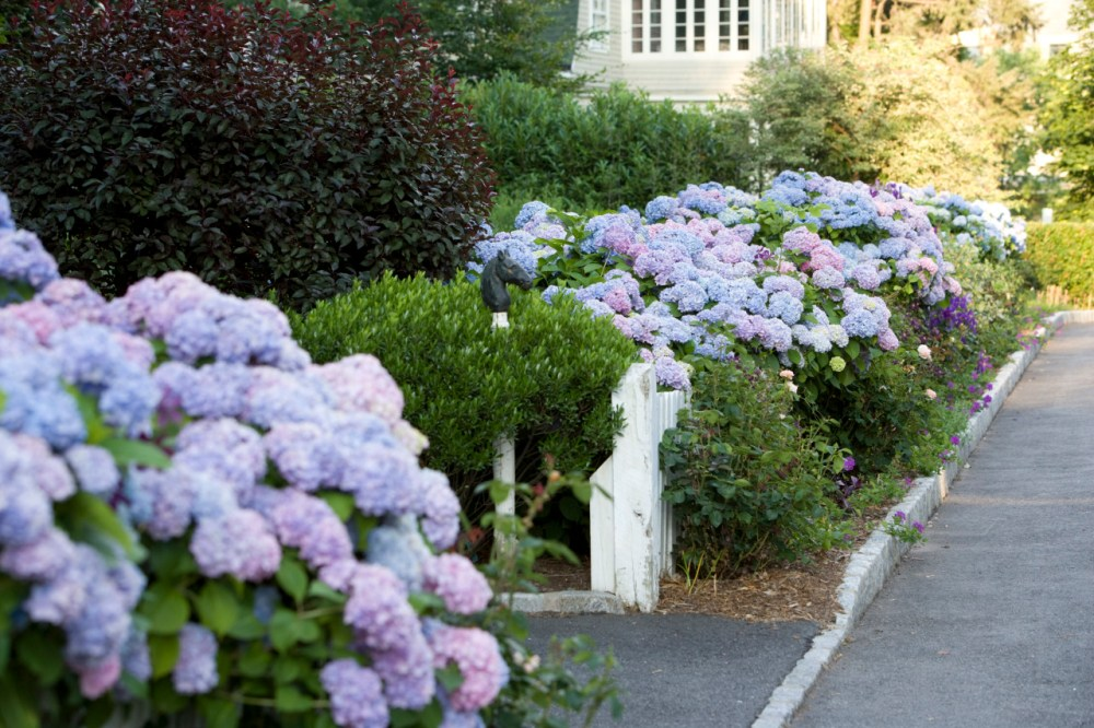 Taman Halaman Rumah Penuh Bunga